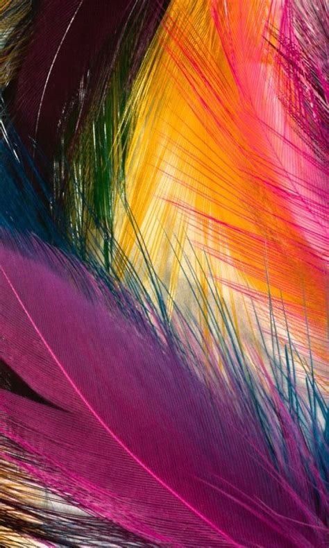 colorful phone wallpapers cool color feathers cell phone wallpapers 480x800 hd