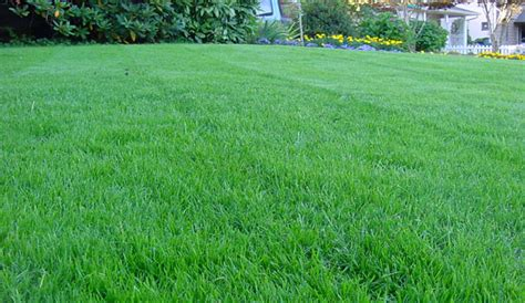 the grass is greener till you get to the other side books lawn care tips soil testing