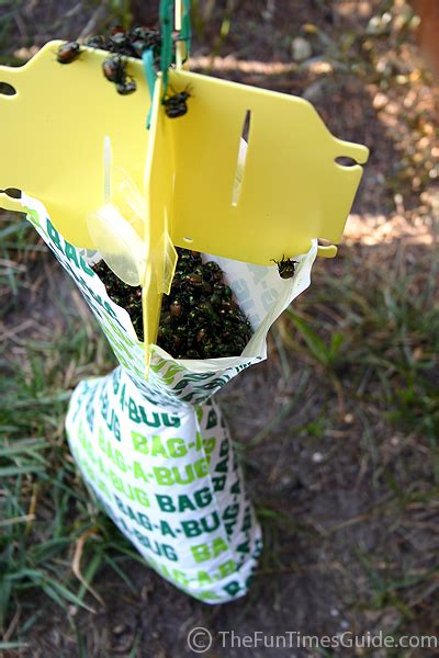 bed bugs traps do those bag a bug japanese beetle traps really work the household tips guide