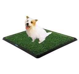 How To Get Rid Of House Odors how to get rid of dog urine smell in house from carpet
