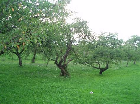 Backyard Orchard Traditional Food Quot Gulas Quot And Quot Sarmale Quot Picture Of