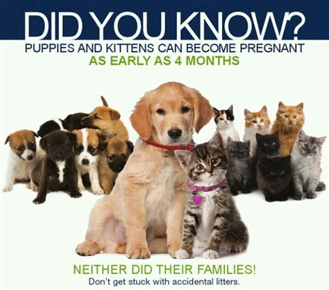 will spaying calm a 28 best images about neuter is cuter on ontario keep calm and for dogs