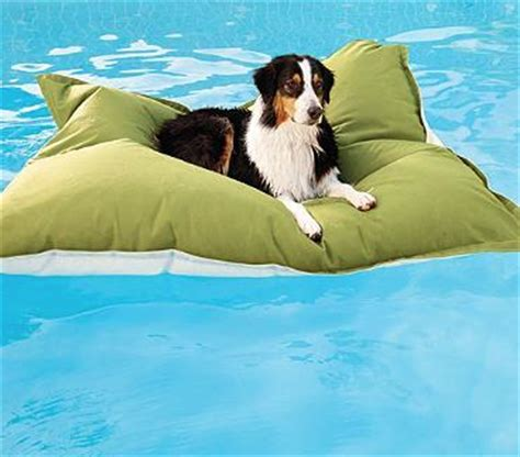 pool rafts for dogs friday fetch pool floats for dogs ammo the dachshund