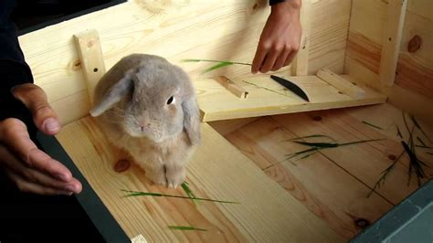 home made bunny cage youtube