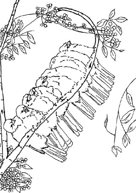 coloring pages of birds in trees birds in tree coloring pages