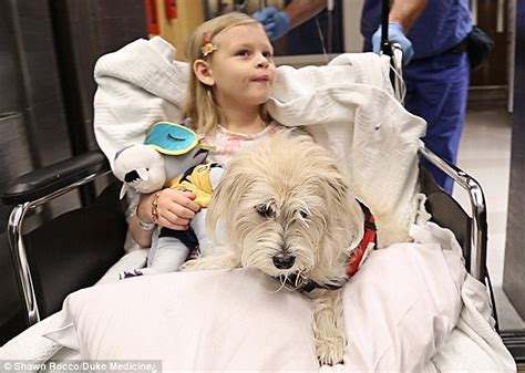 jj s dogs jj to the rescue s is allowed into the operating room during surgery