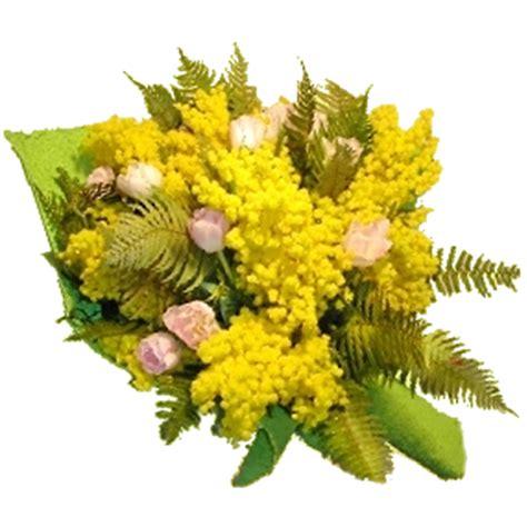 immagini mimosa fiore italia in fiore comprare e inviare fiori festa della donna