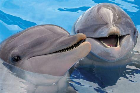 dolphin mini baby animals dolphins mini children s puzzles