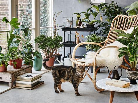 le piante d appartamento le piante d appartamento pi 249 per arredare la casa