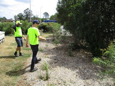 Work For Environmental Groups With An Mba by Rehabilitation At Mimosa Creek Bulimba Creek Catchment