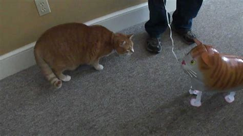 vs cat bert the cat vs cat balloon
