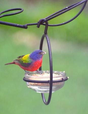 superior customer service review of wild birds unlimited