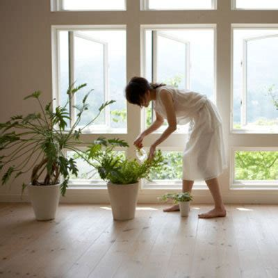plants in home healthiest plants for your home health