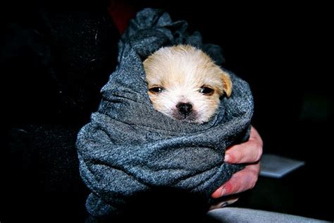 puppy cold cutest puppy pictures and pet photography tips