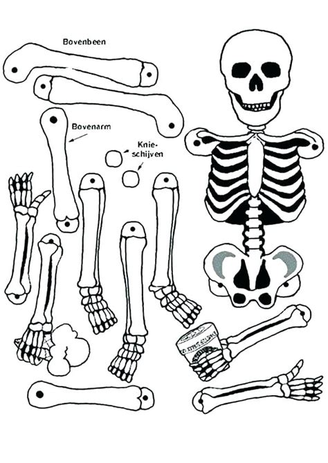 human bone coloring pages  getcoloringscom