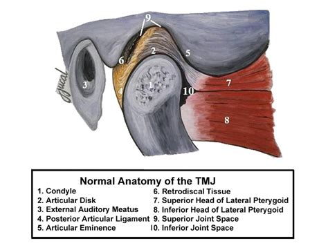 tmj diagram causes of popping and clicking jaw sounds smile columbia