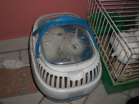 gabbie per coniglietti nani lasciamo i conigli fuori dal cilindro addestrare conigli