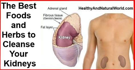 Detox Your Kidneys Naturally by 24 Best Acute Renal Failure Images On Acute