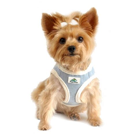 small puppies for free small harnesses for dogs small get free image about wiring diagram