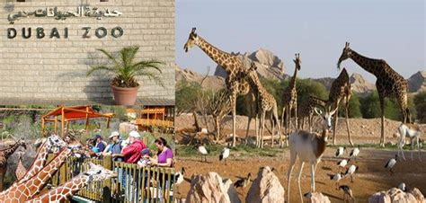 emirates zoo dubai sharjah zoo location check out sharjah zoo location