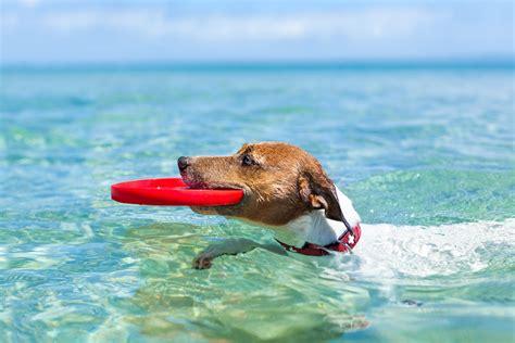 imagenes de animales para wasap 10 playas para ir con perros en espa 241 a