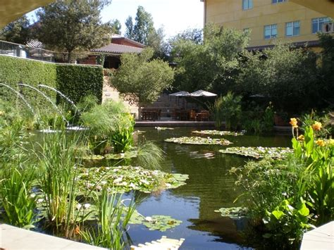 koi fish pond design landscaping network