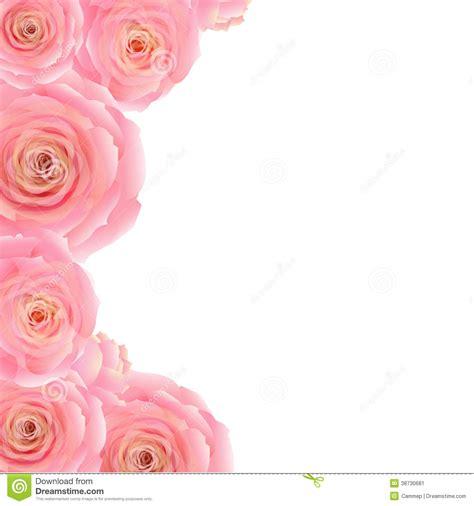 pink rose border stock image image