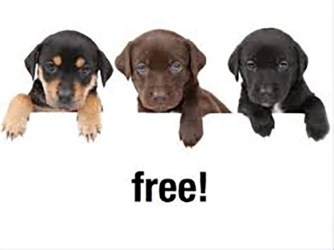 free puppies in idaho puppies indian time