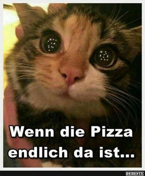 Katzen Meme - 61 besten katzen spr 252 che bilder auf pinterest lustige