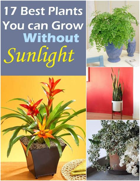 best indoor plants for no sunlight plants that grow without sunlight gardens pinterest