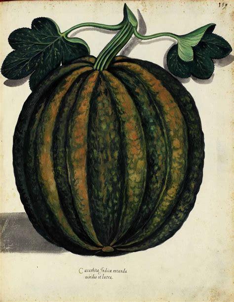 vintage pumpkin botanical pumpkin italian 2 vintage printable at
