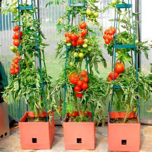 tomato success kit garden supports supports planters