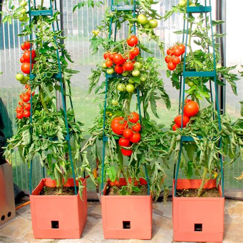Tomato Planter Ideas by Tomato Success Kit Garden Supports Supports Planters
