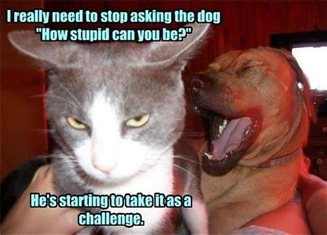 Stupid Animal Memes - funny animal pictures of the day 23 pics