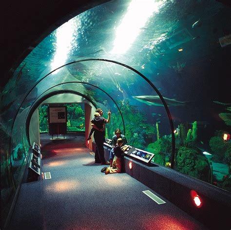 Moody Gardens Aquarium by Moody Gardens Aquarium Galveston Tx Lone State