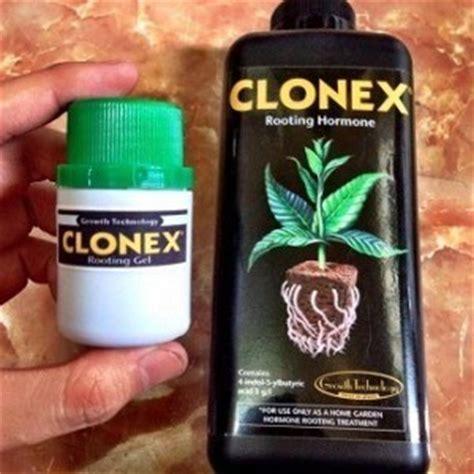 Root Up 100 Gram Hormon Pertumbuhan Akar jual bibit unggul rootone f stek powder bibit
