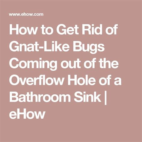 how to get rid of gnats in bathroom the 25 best how to get rid of gnats ideas on pinterest