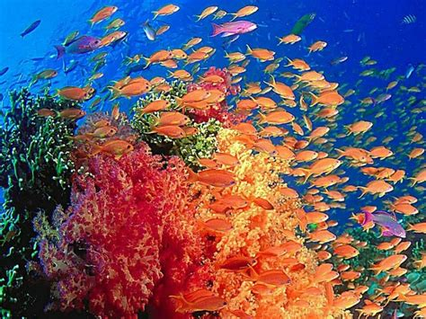 coral reef color beautiful and amazing coral reef sea the color