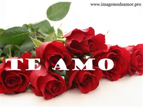 imagenes de rosas con frases de quieres ser mi novia 14 imagenes de hermosas rosas con frase te amo