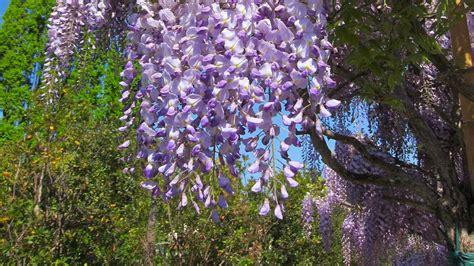 catalogo piante da giardino piante ornamentali catalogo vivaio mati 1909 pistoia