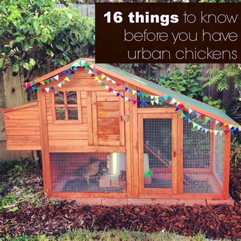 urban backyard chickens 210 best coops and more images on pinterest chicken coops backyard chickens and coops