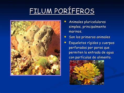 imagenes de animales poriferos arquetipos animales