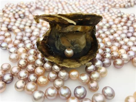 pearl in bulk bulk pearl oysters 2 50 each wholesale oval or