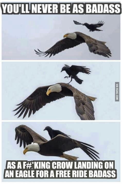 Storm Crow Meme - storm crow meme 100 images tell me again why storm