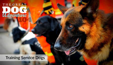 who trains service dogs service dogs ferndog