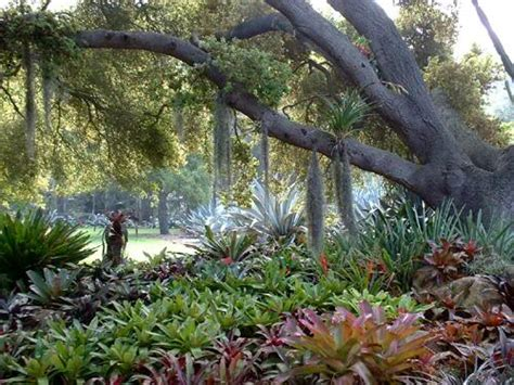 Gardening South Florida Style: Bromeliads in the Garden