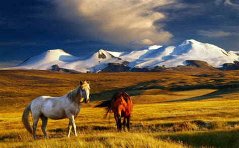 Altai Mountains (Siberian District)   All You Need to Know