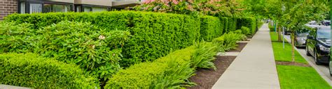 Commercial Landscaping Simply Green Landscaping Simply Green Landscaping