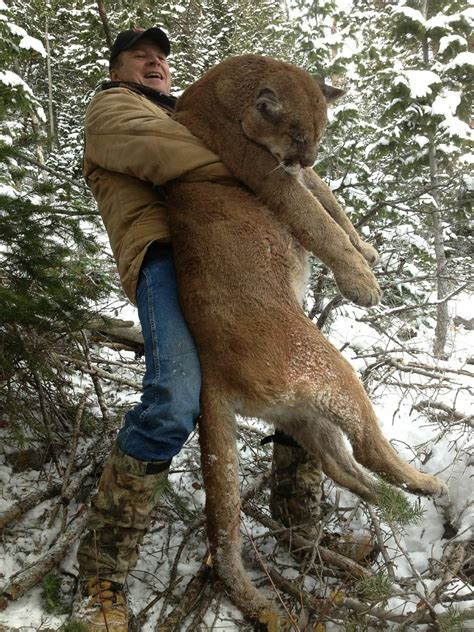 outdoor adventures worldwide utah cougar hunting