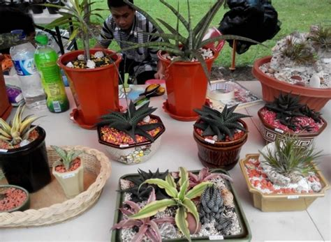 Lu Hias Cantik cara membuat bolu hias cara membuat tanaman hias mini